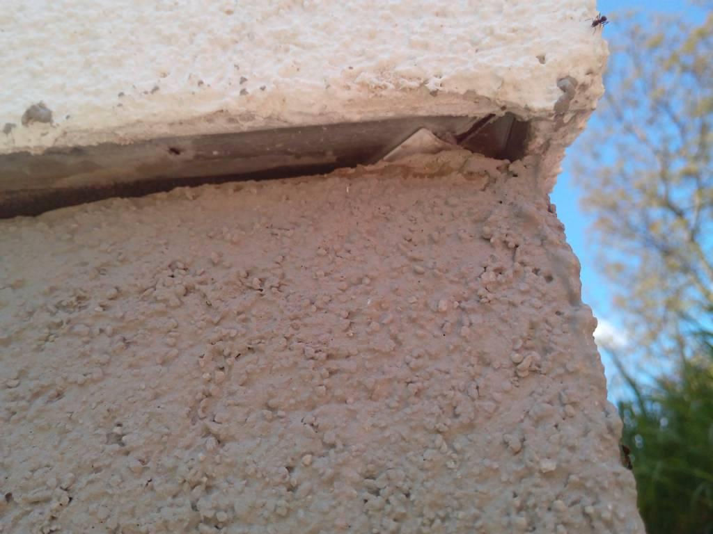 Ameisen in der fuge der boden fassade bauforum auf - Ameisen in der wand ...