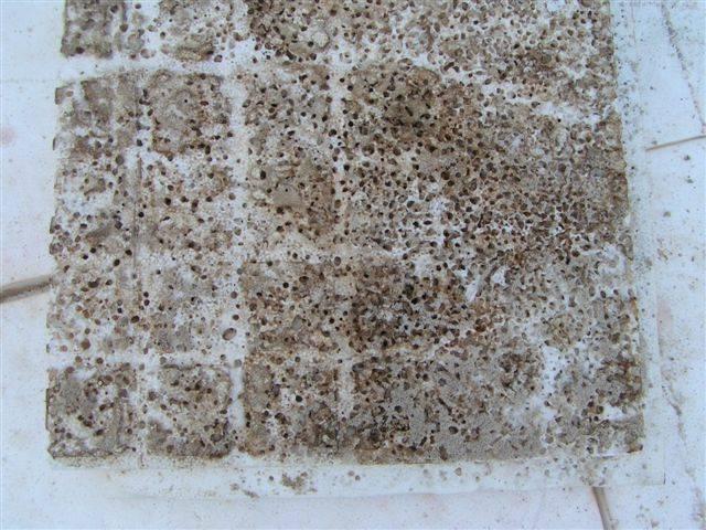 Ameisen forum auf - Ameisen in der wand ...