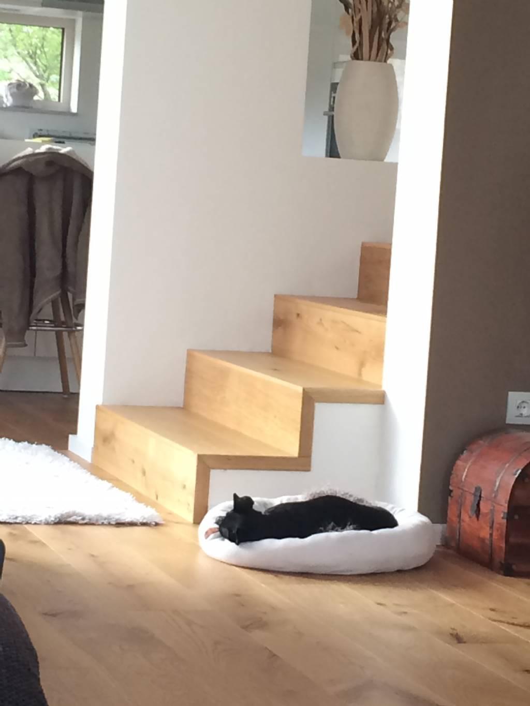 betonstiegenverkl vollholz vs parkett bauforum auf. Black Bedroom Furniture Sets. Home Design Ideas