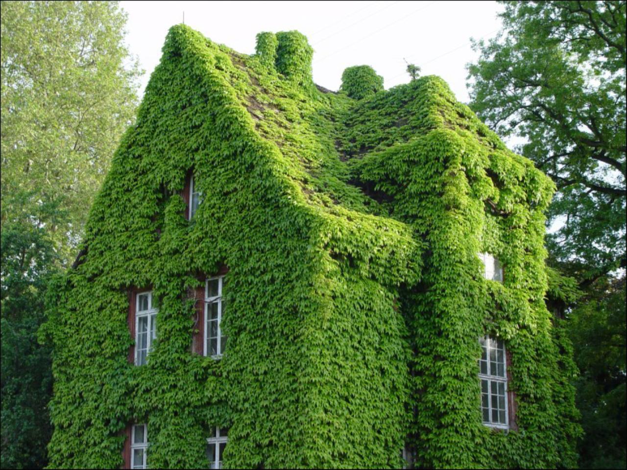 Sichtschutz Dunn Und Immergrun Gartenforum Auf Energiesparhaus At