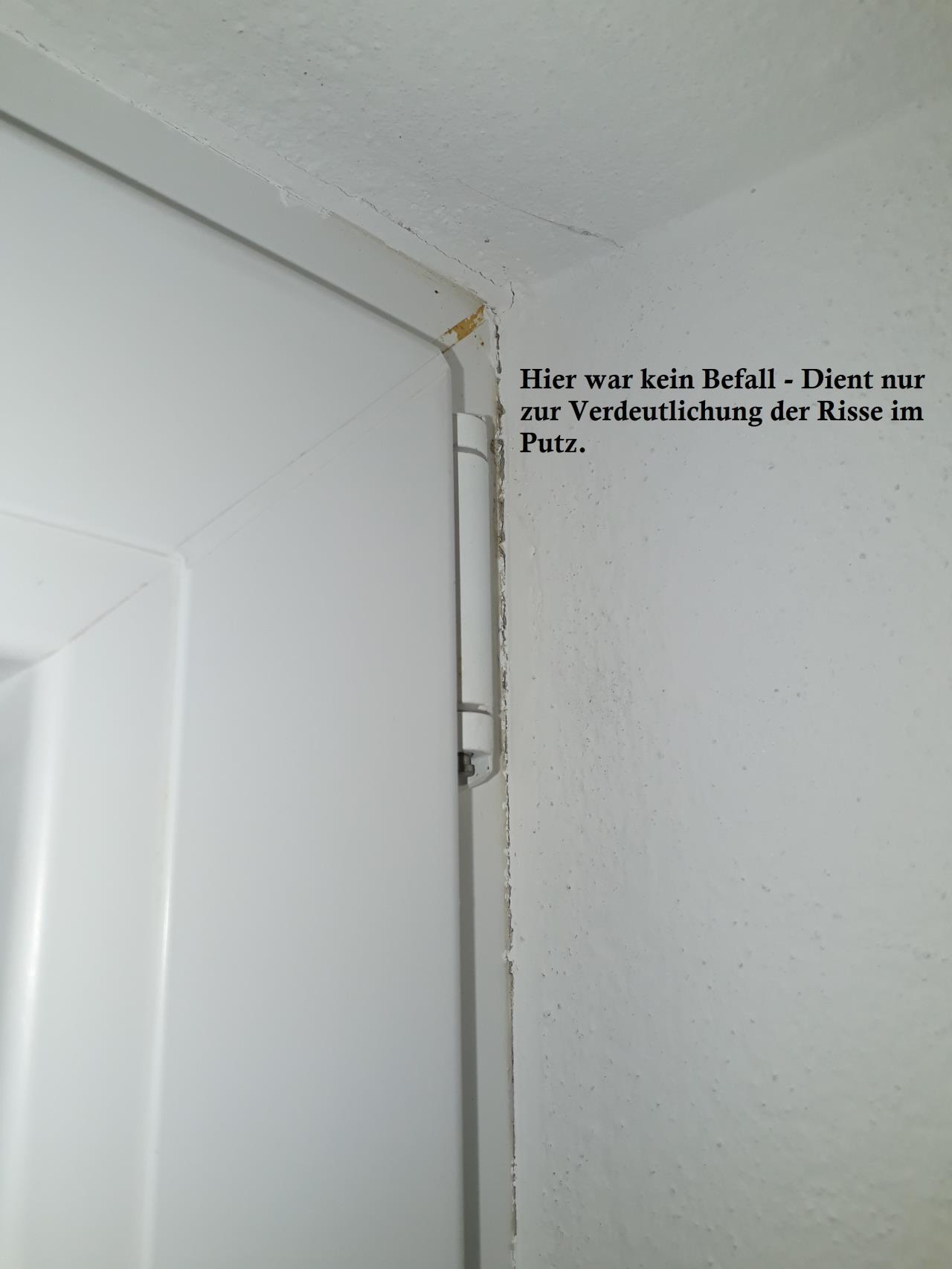 schimmel am bergang fenster mauer seite 2 fensterforum auf. Black Bedroom Furniture Sets. Home Design Ideas